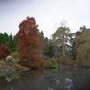 The Pond in Autumn, Royal Botanic Garden, Edinburgh.