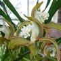 Botanics_082