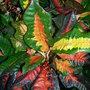 Botanics_098