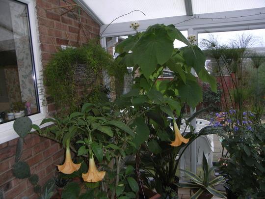 conservatory plants, nov 26th  2008