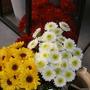 Cut flowers for church social. Mums, daisies.