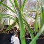 Mystery houseplant 2