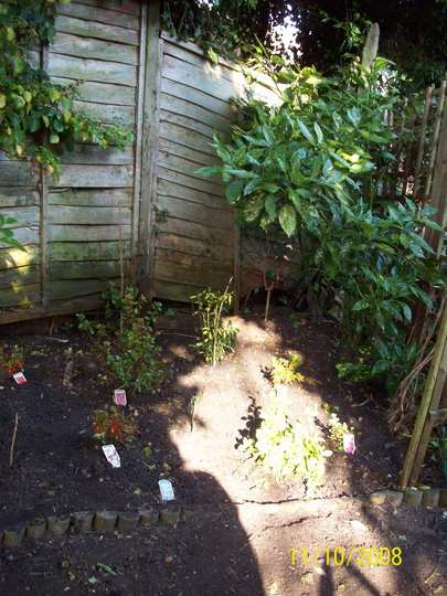 New Planting.