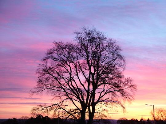 Sunset at Foxhollow