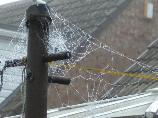 Spiders web 2