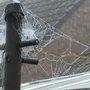 Spiders_web_002
