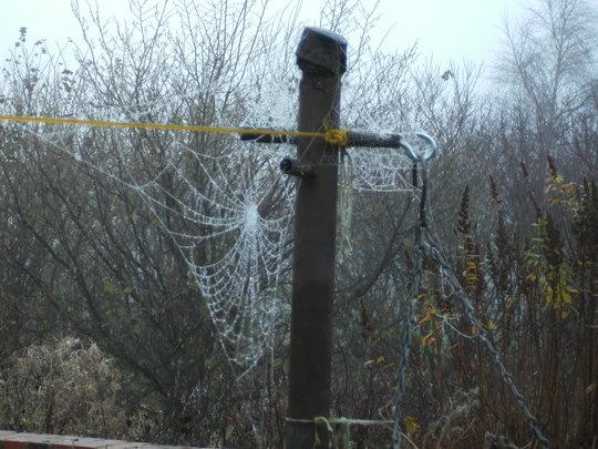 Spiders Web 4.