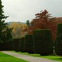 Clipped Yew in the Cathedral Grounds, Dunkeld, Perthshire, Scotland.