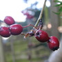 Garden_066