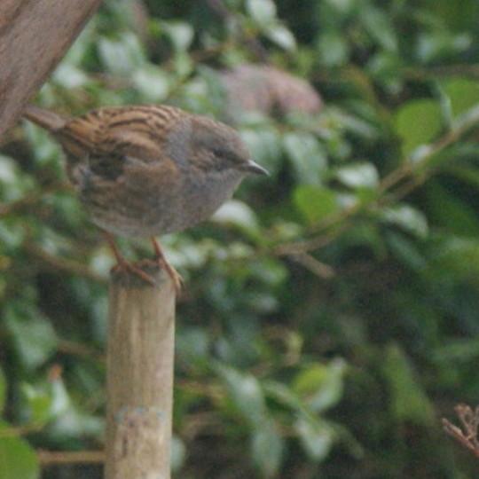 Little Mystery Bird