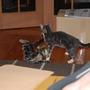 cats_.jpg