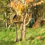 Autumnal_cherry