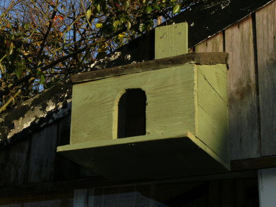 Dove box   des. res   For Snowball
