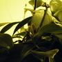 2008_1205dec2_dec60003