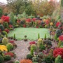 Autumn_acer_glory