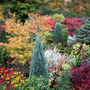 Autumn_colours_lower_garden_
