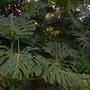 Plant_pics_12_06_08_052