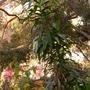 Plant_pics_12_06_08_067