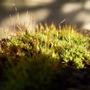 moss on garden wall