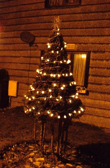 My Chritmas Tree @ Night