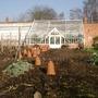 Rhubarb pots (Rhubarb)