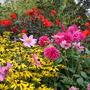 College_garden_summer_2007_021