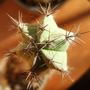 Cactus from above.