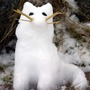 Snow_cat_dog