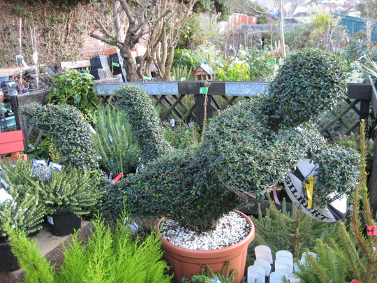 Topiary in local garden shop