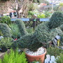 Topiary in local garden shop