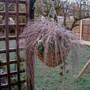 frosty winter basket