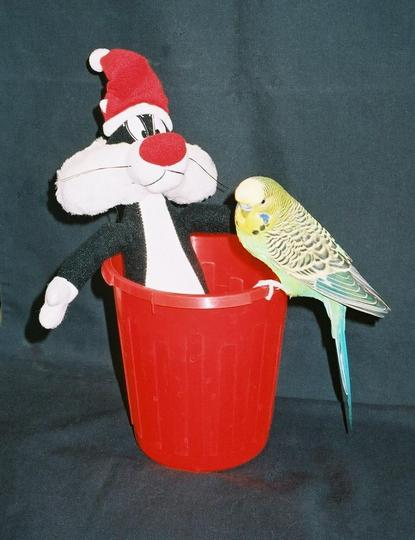 Christmas Crocus