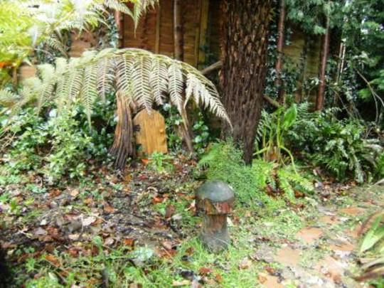 Tree ferns with fairies