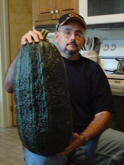 Giant English Vegetable Marrow