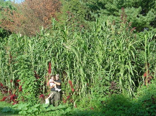Giant Garden Picture