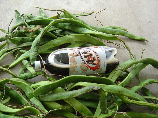 large runner beans