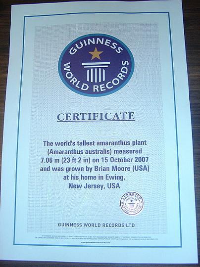 Guinness World Record Certificate - Tallest Amaranthus for 23 feet 2 inch Amaranthus australis