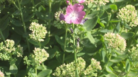 another plant at the arborarium