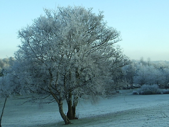 On a Cold and Frosty Morning
