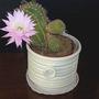 Cactus_5