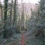 Forest_walk