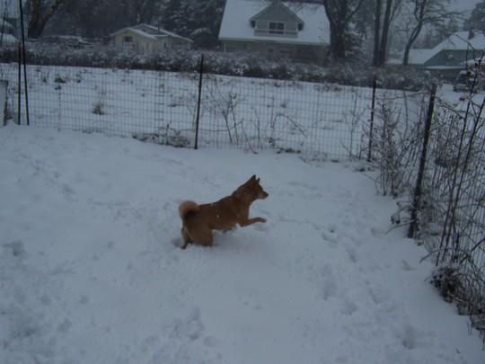 Phoebe Nov.2006