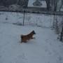 Snow_nov27_06_006