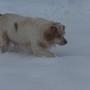 Snow_nov27_06_014