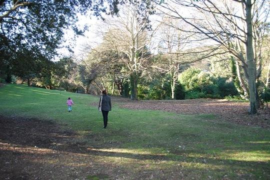 Woodland walk, Ventnor Botanics