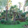 Sub-tropical Palm Garden