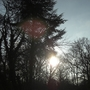 Sun breaking through the trees - Hanworth 281208