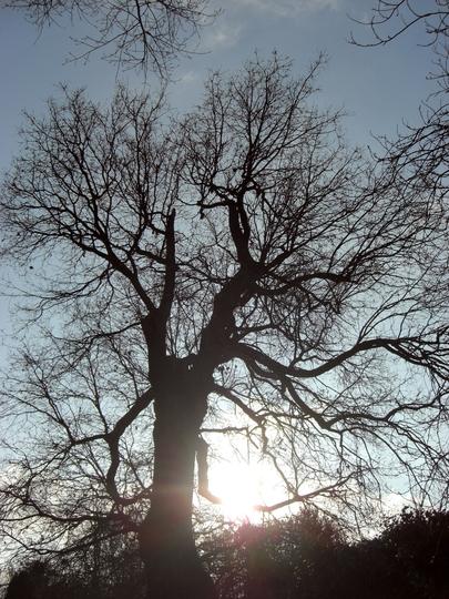 Sun breaking through winter trees in Hanworth  2 281208