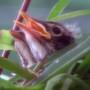Robin_nest_082