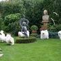 my dogs in their garden